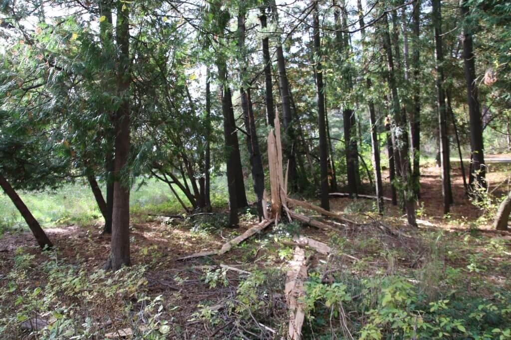 white pine lightning strike